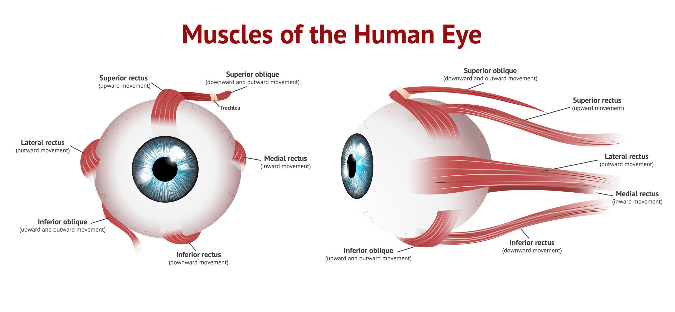 Kurzsichtigkeit verbessern, Mithal Al-Khafagi Augentraining